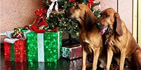 313-presents-a-christmas-story-humane-society-deal.jpg